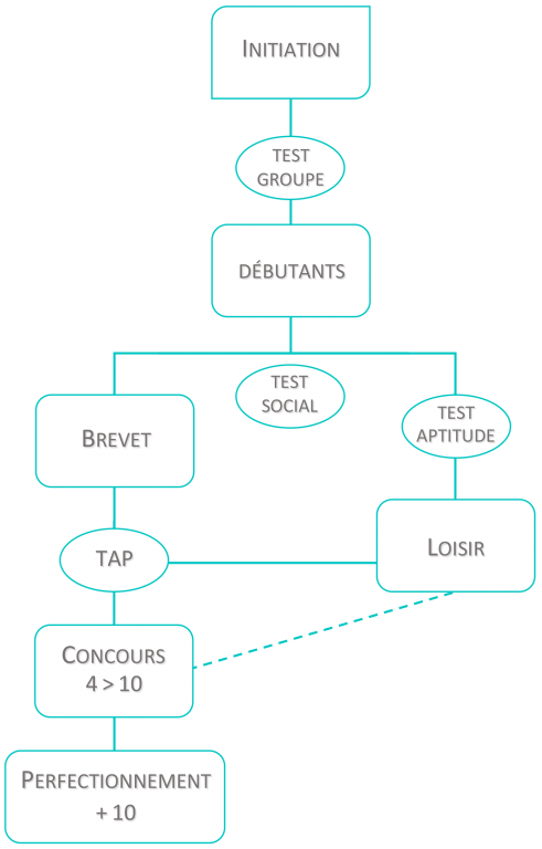 Organigramme d'agility